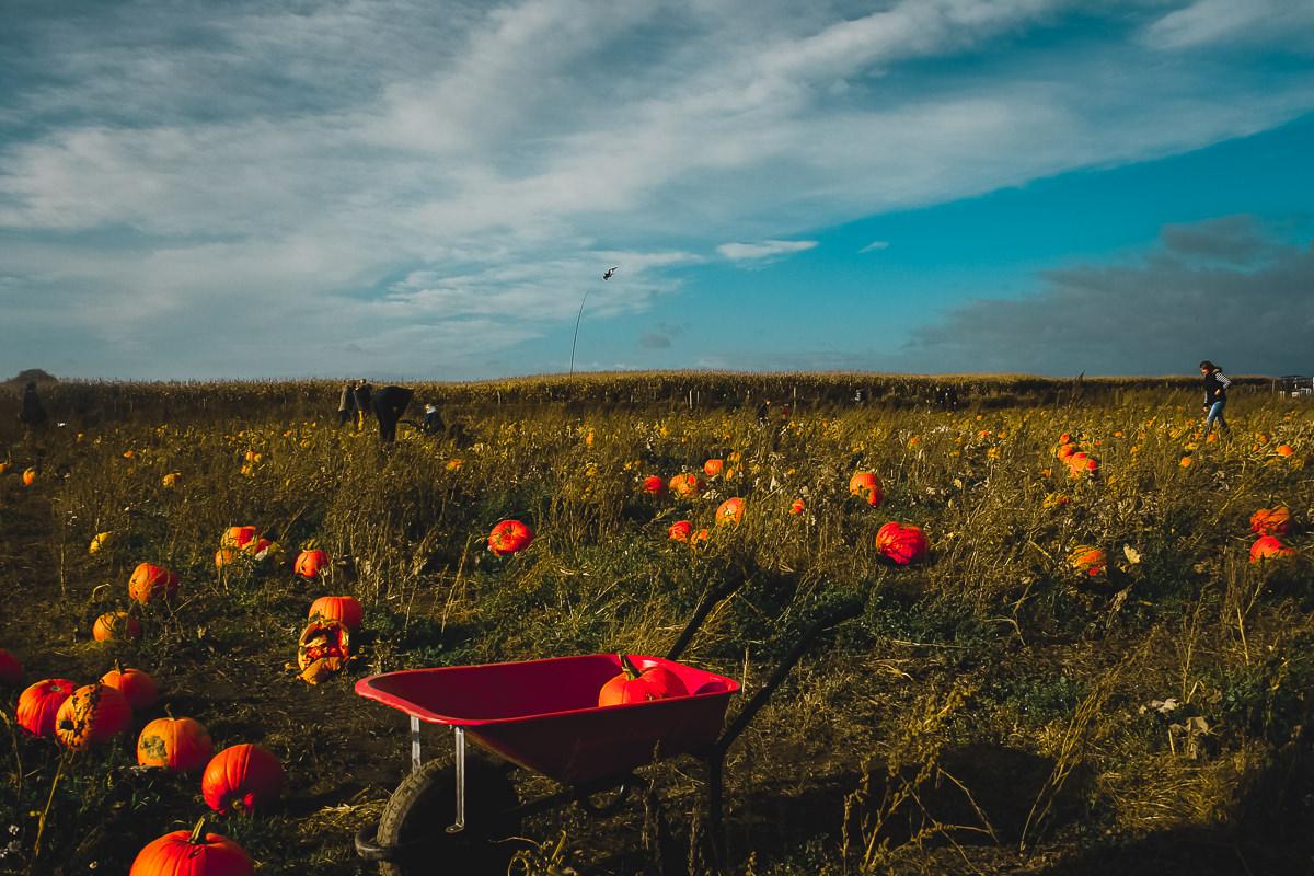 October Farmer Copleys Pumpkins-25