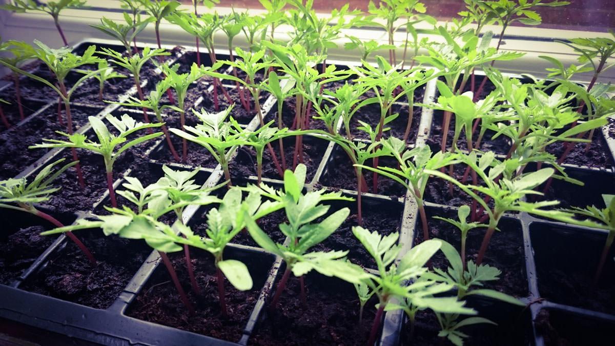 April-Planting-Garden-Seeds