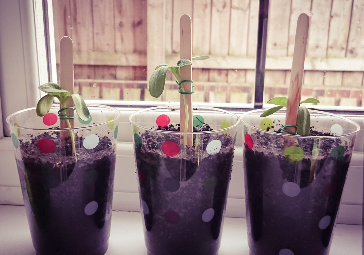 April Planting Seeds Garden-2